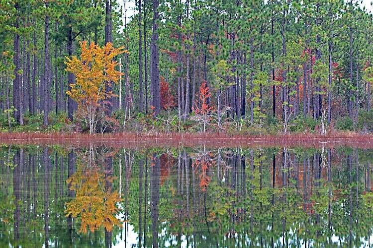 big pond color