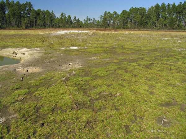 big pond no water left