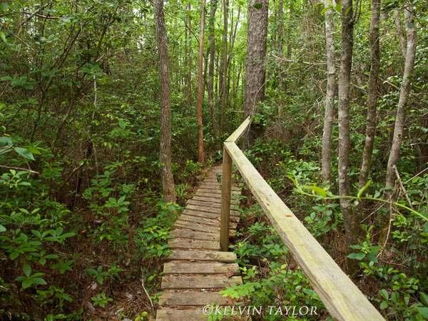 green swamp boardwalk