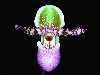 paphiopedilum victoria-regina