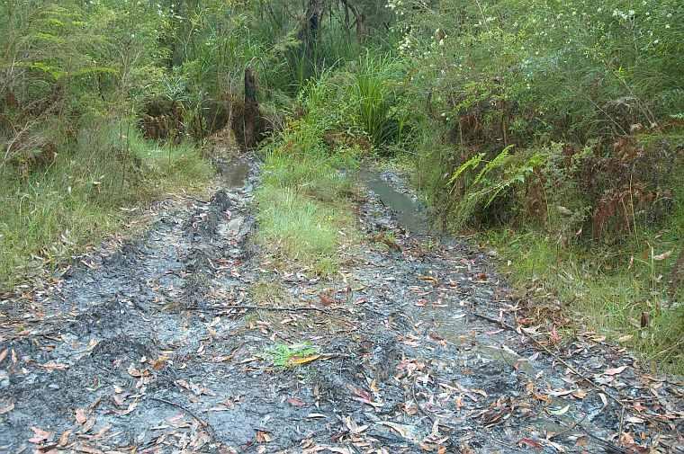 vehicle damage to Pterostylis baptistii site