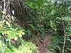 danhatchia australis habitat