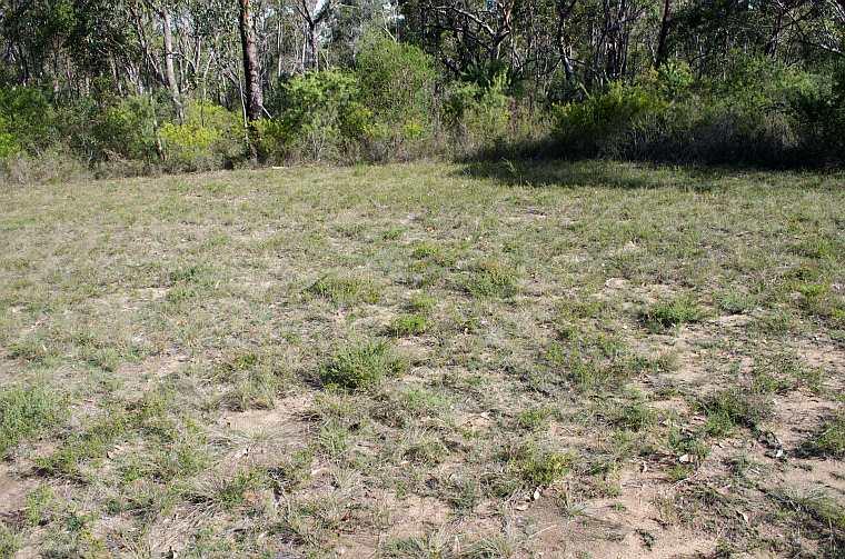 Speculantha parviflora habitat