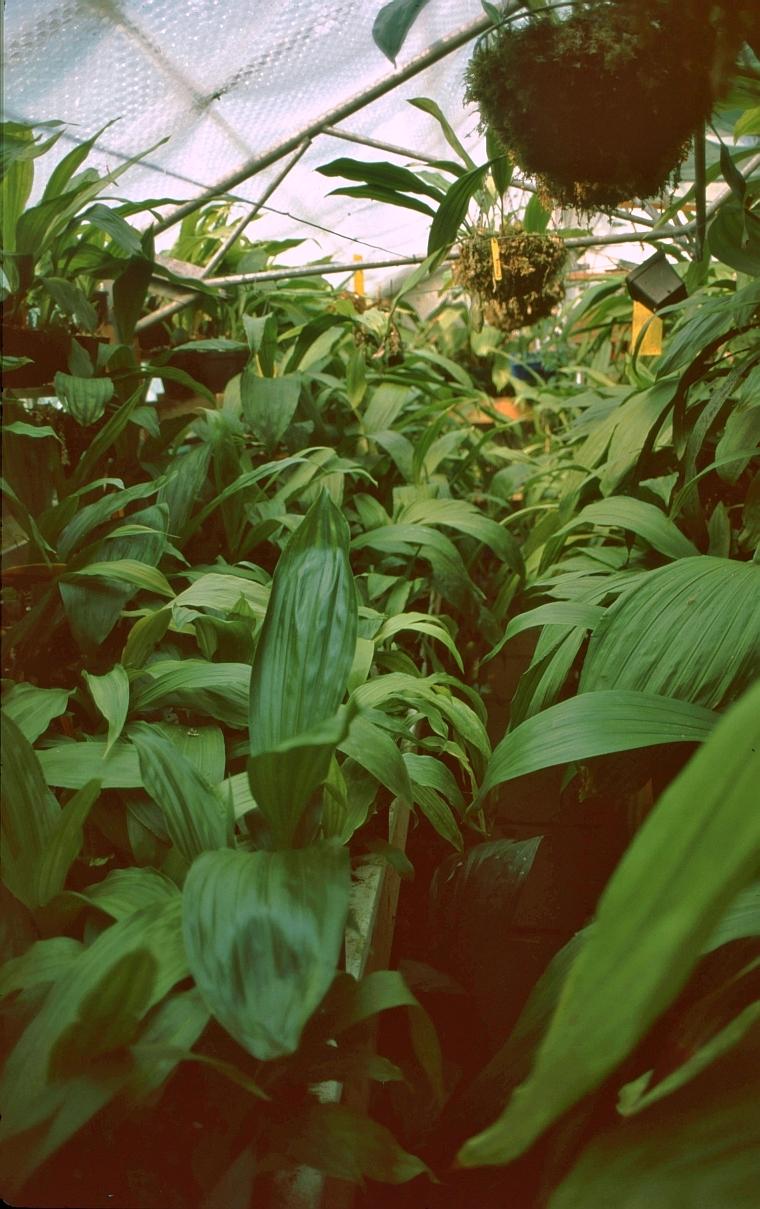 oakeley greenhouse
