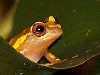frog100.jpg