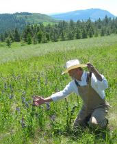 NATIVE PLANT GUARDIAN: Huber admires the vibrant petals of Blue Mountain penstemon on GROWISER's bunchgrass prairie. To the southeast rises Hug Hill and, in the distance, the rocky head of Mount Harris. - Photos/SARAH WEST