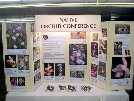 Native Orchid Conference display