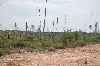 Bukit Barisan Selatan National Park deforestation