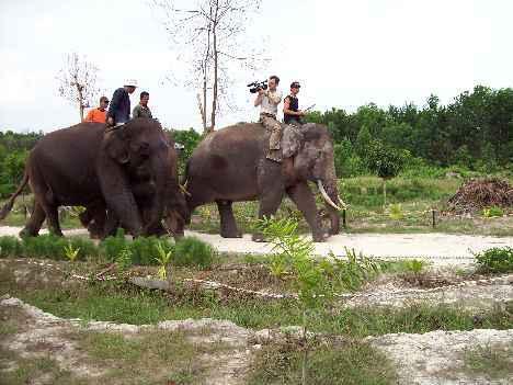 elephants camera