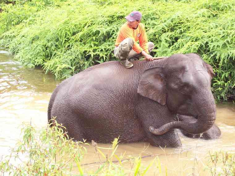 elephantswater2760.jpg