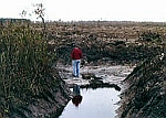 GreenSwamp_NC loggong and draining