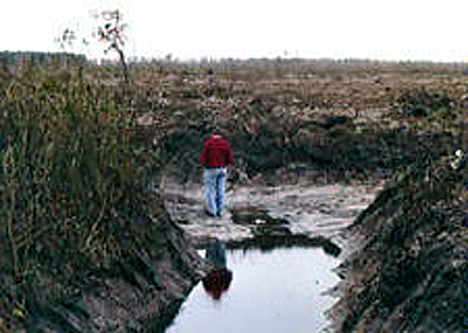 GreenSwamp NC deforestation and drainage canals