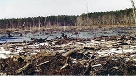GreenSwamp_NC Logging