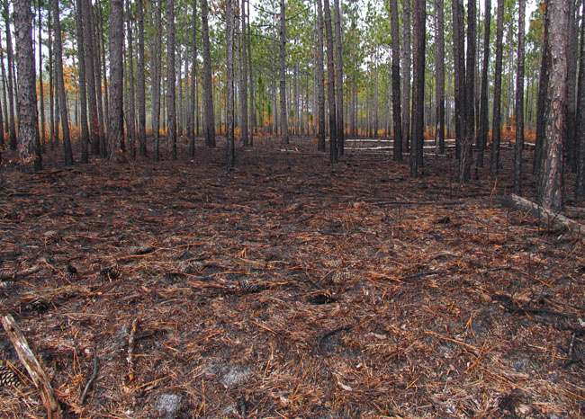 burned area across the road from the pond