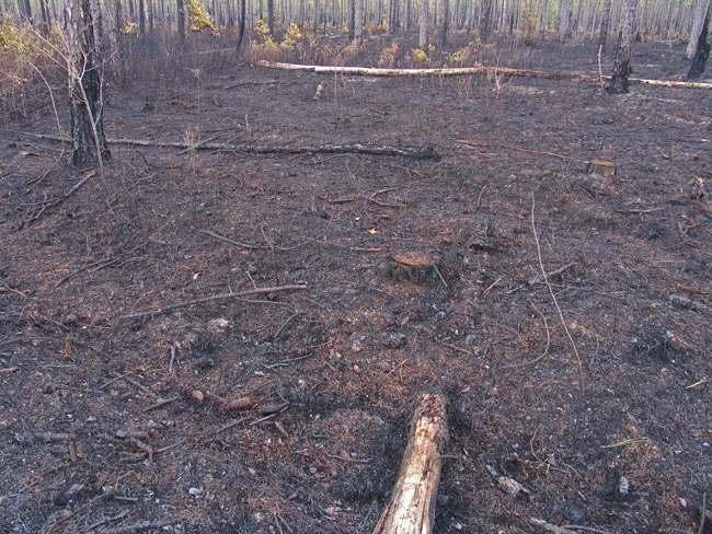 burned area along hwy 211
