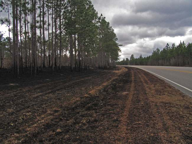 burned area along hwy 211 facing south