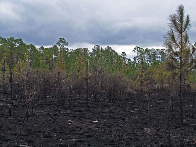 edge burned savanna