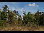 mrytle head savanna