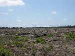 tree farm harvest