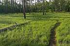 green swamp savanna