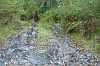 vehicle damage to Pterostylis baptistii