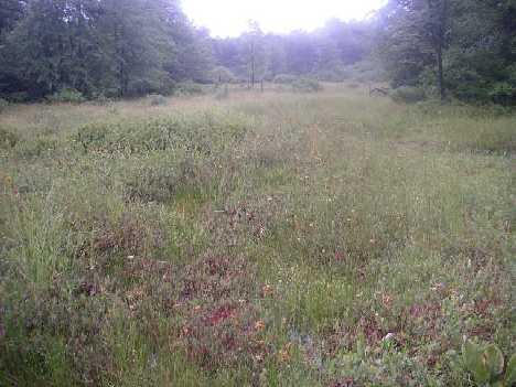 Markleysburg Bog