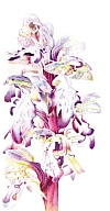 art for orchids