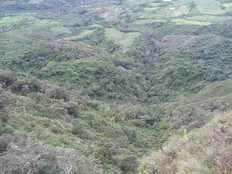 deforestation tucuman parrot reserve