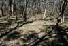 Arachnorchis (Caladenia) rosella habitat