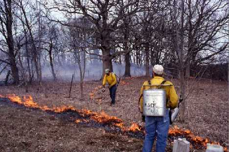 prescribed burn oak savanna