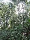 bosquedas orquideas forest