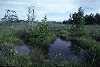 brokenhead pond