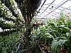 view of a greenhouse