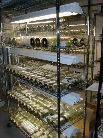 orchid seedbank project