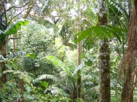 secondary restored rainforest